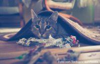 Katze versteckt unter Teppich
