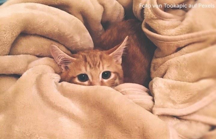 Ängstliche und gestresste Katze