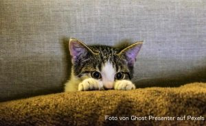 Silvester bedeutet für viele Tiere Angst und Stress