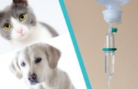 Chemotherapie bei Hund und Katze