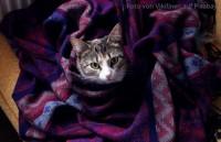 Katze mit Blasenentzündung/FLUTD