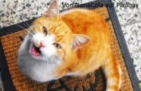 Katze mit ständigem Harndrang