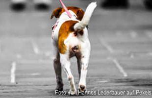 Hund auf Straße