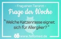Welche Katzen eignen sich für Allergiker?