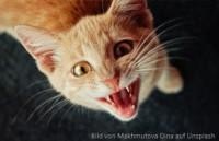 Katze kann nicht pinkeln