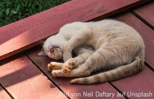 Rolligkeit Katze