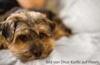 Hund mit Bauchspeicheldrüsenentzündung