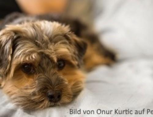osteosarkom knochenkrebs beim hund symptome behandlung und. Black Bedroom Furniture Sets. Home Design Ideas