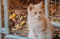 Katze mit hohem RIsiko für FIV