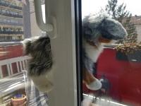 Im Fenster eingeklemmte Katze.