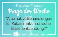 Chronische Blasenentzündung Katze: alternative Behandlungsmöglichkeiten?