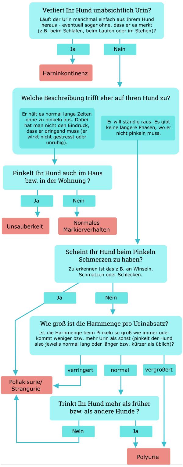 """Entscheidungsbaum zum Problem """"Hund pinkelt viel"""""""