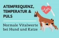 Vitalwerte bei Hund und Katze