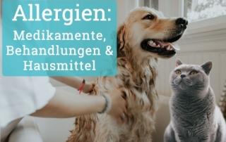 Allergie-Behandlung: Medikamente und mehr