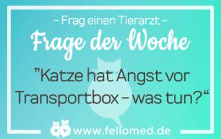 Katze hat Angst vor Transportbox - was tun?