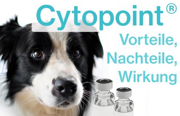 Cytopoint: Vorteile, Nachteile, Wirkung