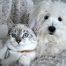 Desensibilisierung (Hyposensibilisierung) bei Hund & Katze