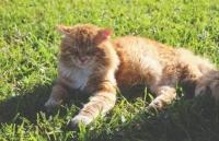 Katze bei Hitze im Sommer