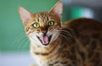 Blut Im Stuhl Bei Der Katze Ursachen Diagnose Fellomed