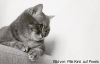Lipom Katze