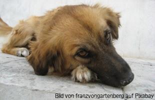 Lipom Beim Hund Ursachen Symptome Diagnose Behandlung