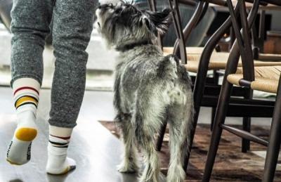 Analdrüsen bei Hund und Katze