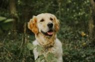 Diagnose der Hypothyreose beim Hund