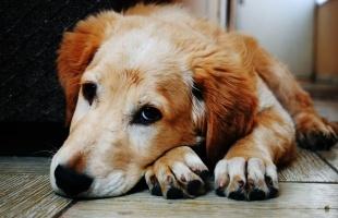 Inkontinenz Blasenschwäche Beim Hund Ursachen Behandlung