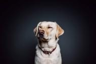 Hot Spot beim Hund