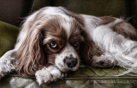 Blut im Stuhl bzw. blutiger Durchfall beim Hund