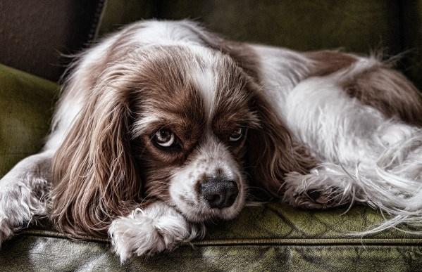 Blut Im Stuhl Beim Hund Ursachen Diagnose Behandlung Fellomed
