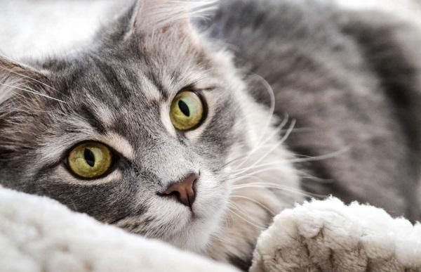 Blut Im Stuhl Bei Der Katze Ursachen & Diagnose