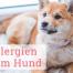 Allergien-Hund-Themenwelt