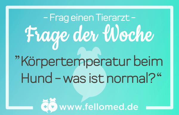 Körpertemperatur beim Hund: was ist normal?