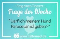 Darf man Hunden Paracetamol geben?
