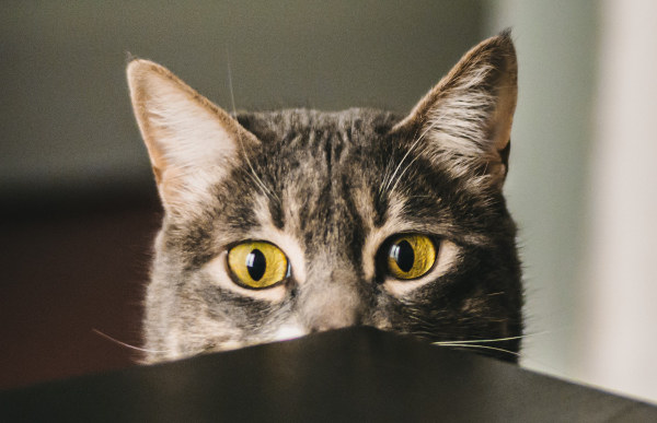 Plattenepithelkarzinom Katze