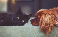 Abführmittel bei Hunden und Katzen mit Verstopfung