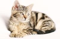 Wann Katze/Kater kastrieren
