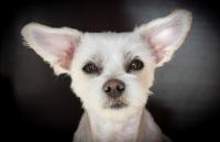 Blasensteine (z.B. Struvitsteine) und andere Harnsteine beim Hund