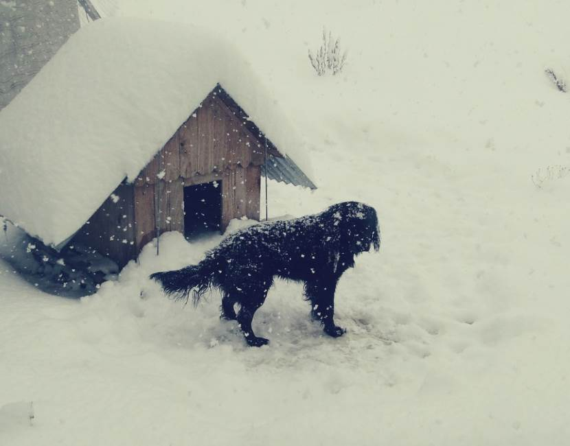 Hund mit Hundehütte in Kälte und Schnee