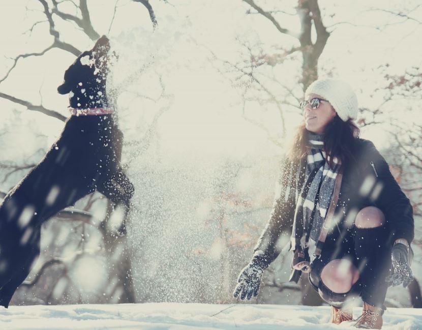 Hund frisst beim Spielen Schnee