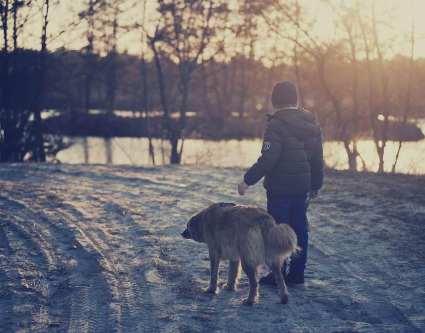 Hund am See mit Schnee und Eis