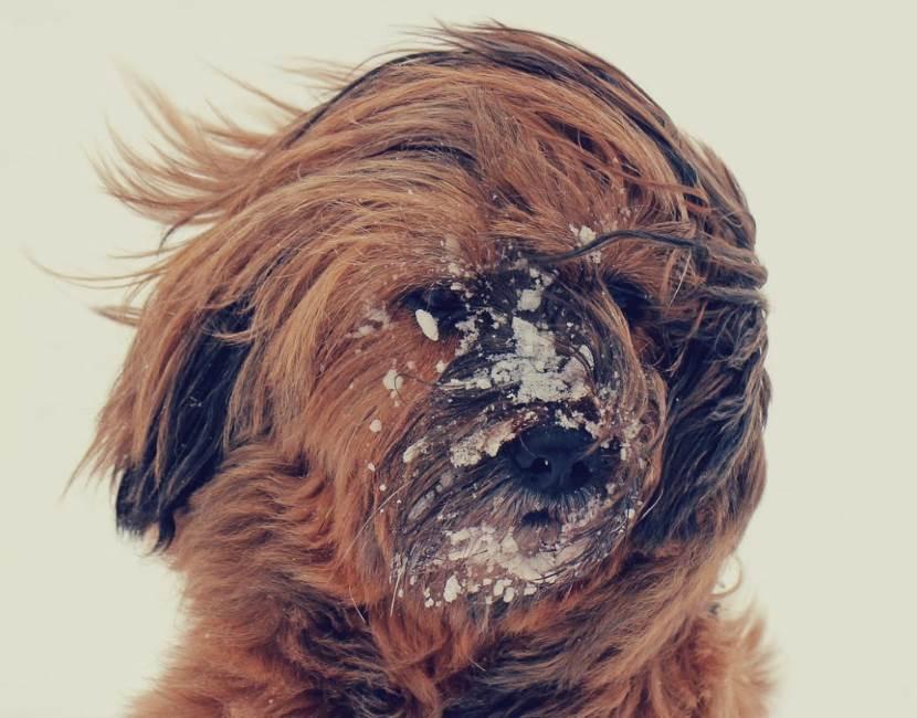 Hund in der Kälte friert