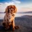 Hund pinkelt viel - Test & Ursachenübersicht