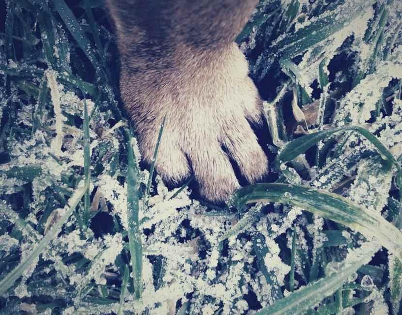 Hundepfote im Schnee