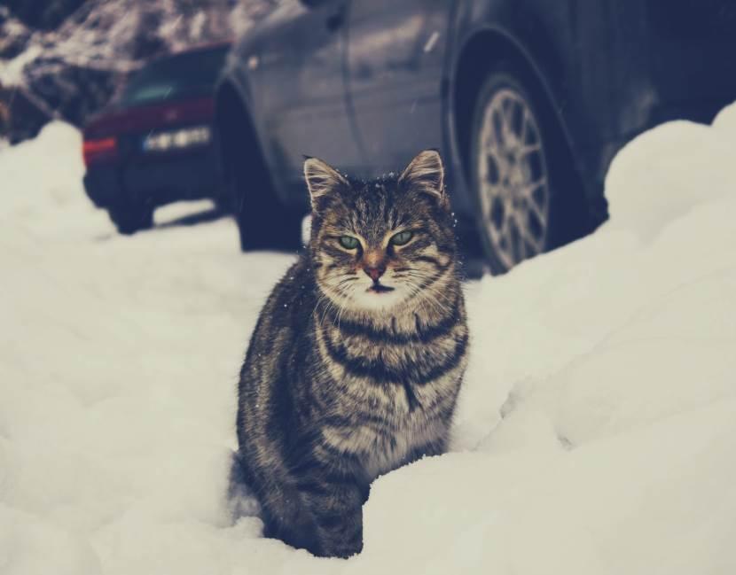 Katze in der Kälte mit Auto