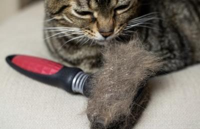 Schuppen bei einer Katze