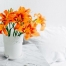 Lilien: giftig für Katzen