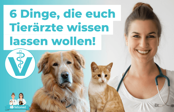 6 Dinge, die Tierhalter aus Tierarztsicht wissen sollten