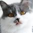 Katze sabbert/speichelt